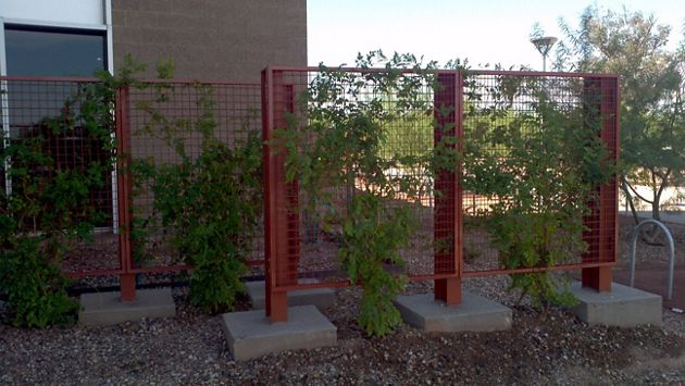 ECO-MESH by McNICHOLS applied as a fencing partition and doubles as a plant screen in Mesa, AZ